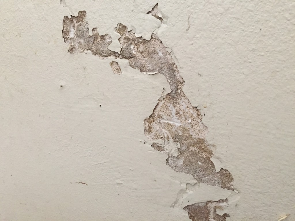 Termites eating drywall paper